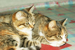 Two cute cat Stock Photo