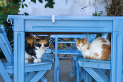 Two cute cats sleeping on wooden chairs. Royalty Free Stock Photography