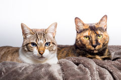 Two cute cats staring. At the same place Stock Photography