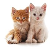 Two cute cats. Two cute cats on a white background stock photo