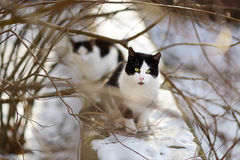 Two cute cats at winter Stock Image