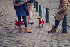 Two cute chihuahua dogs dressed as Santa Claus in the street Stock Images