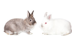Two cute Easter bunnies in profile Stock Photography
