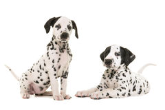 Two cute dalmatian puppy dogs. Sitting and lying down facing the camera isolated on a white background both with tails up stock photos