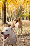Two cute dog friends, natural bokeh background stock image