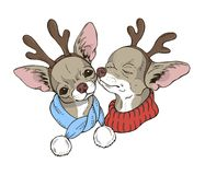 Two cute dogs in Christmas costumes Royalty Free Stock Photography