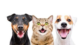 Two cute dogs and funny cat. Isolated on white background stock photos