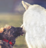 Two cute dogs licked Stock Photo