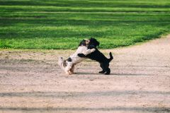 Two cute dogs playing. And hugging each other in a park stock images