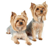 Two cute dogs Stock Photo