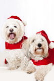 Two cute dogs in santa outfits Royalty Free Stock Photos