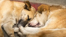 Dogs Sleeping. Two cute dogs sleeping next to each other Stock Photo