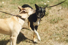 Two cute dogs talking playing and having fun from shelter outsid. E in sunny park, adoption concept Royalty Free Stock Photography