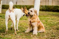 Two dogs playing outdoors. dog is frightened Royalty Free Stock Images