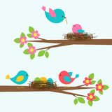 Two cute families of birds on blooming branch tree Stock Images