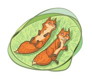 Two Cute Foxes Stock Photography