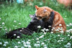 Two cute ginger and tabby cats in long grass Stock Photo