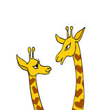 Two cute giraffes on white background. Declaration of love.  Stock Photos