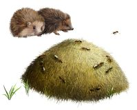Anthill with ants. Two hedgehogs