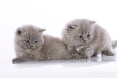 Two cute kittens. On white studio background stock photography