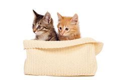 Two cute kittens Royalty Free Stock Photos