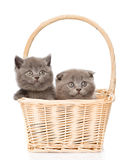Two cute kittens in basket looking at camera. isolated on white Stock Photography