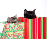 Two cute kittens in boxes Royalty Free Stock Photos
