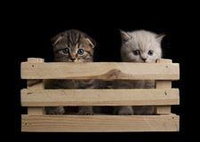 two cute kittens peeking out of a wooden box. on a black background royalty free stock photos