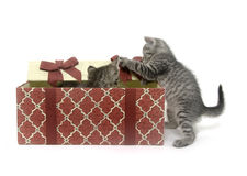 Two cute kittens playing in gift box Stock Photo