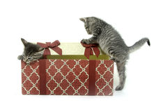Two cute kittens playing in gift box Stock Photos