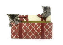 Two cute kittens playing in gift box Royalty Free Stock Images