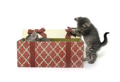 Two cute kittens playing in gift box Stock Images