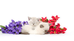 Two cute kittens sleeping Stock Images
