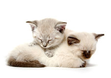 Two cute kittens sleeping Royalty Free Stock Photos