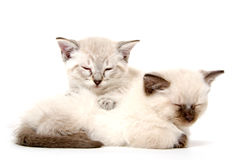 Two cute kittens sleeping Stock Photography