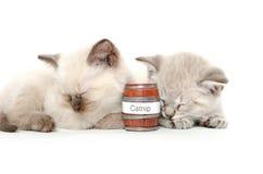 Two cute kittens sleeping Stock Image
