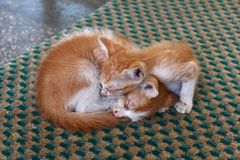 Two Cute Kittens sleeping in the street Stock Photos