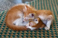 Two Cute Kittens sleeping in the street Royalty Free Stock Photos