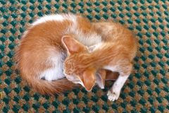 Two Cute Kittens sleeping in the street Royalty Free Stock Images
