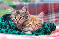 Two cute kittens in a towel stock photography