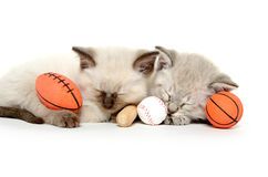 Two cute kittens with toys Royalty Free Stock Photo