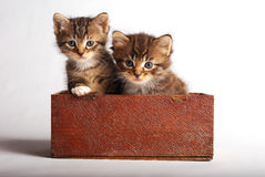 Two cute kittens in wooden box. Two cute kittens in wooden box on white background Stock Image