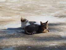 Cute kittens are relaxing on the floor royalty free stock photos