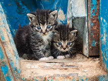 Two cute kittens. Young cats looking forwards royalty free stock photography