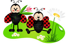 Two cute ladybugs in garden Stock Photography