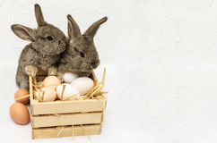 Cute little easter bunnies with wooden box full of easter eggs. Two cute little easter bunnies with wooden box full of easter eggs. Easter card with concrete Stock Photo