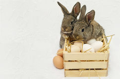 Two cute little easter bunnies with wooden box full of eggs. Easter card with concrete white background Royalty Free Stock Image