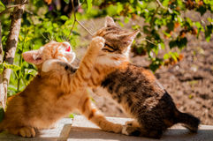 Two cute little kittens chase each Royalty Free Stock Photos