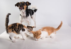 Two Cute little kittens and dog Stock Images