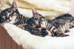 Two cute little kittens lying sleeping together Stock Photos